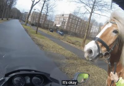 cavalli spaventati