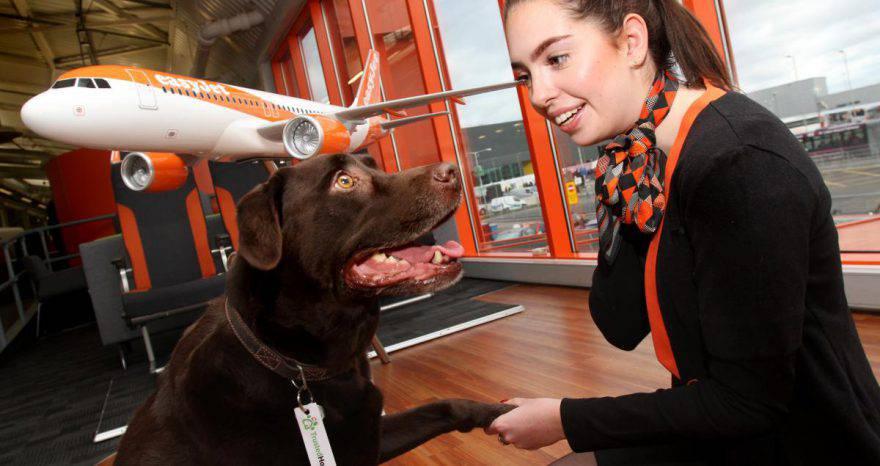 pagati viaggiare con animali cani