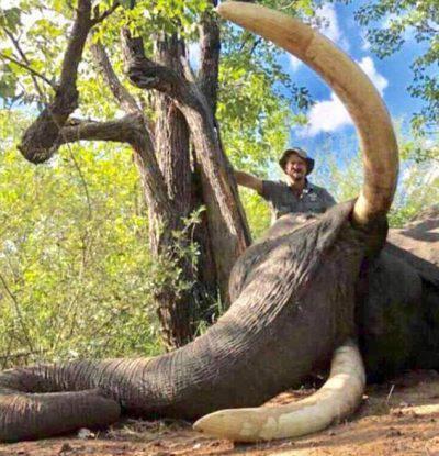 elefante ucciso