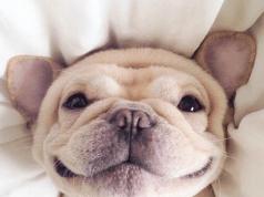 felicità animali