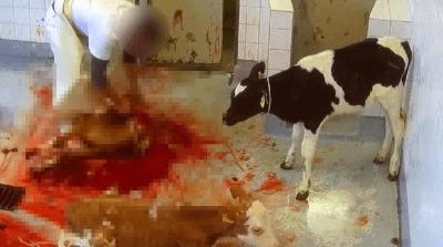 abbattimento animali