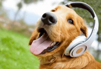 musicoterapia per animali