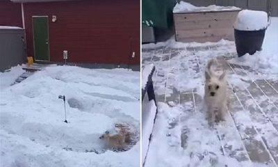 Cane abbandonato nella neve