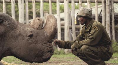 Morto ultimo Rinoceronte Bianco