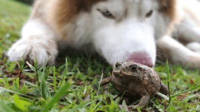 avvelenamento cane