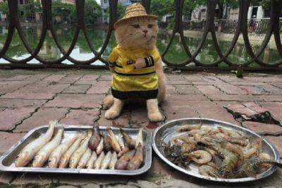 gatto vende pesce