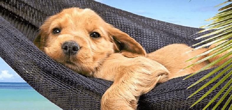 vacanze animali a pasqua con il cane dove andare