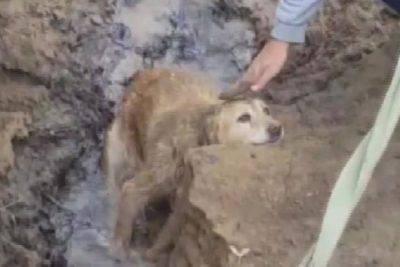 cane disperso