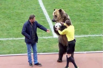 orso partita calcio