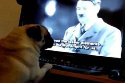cane saluto nazista