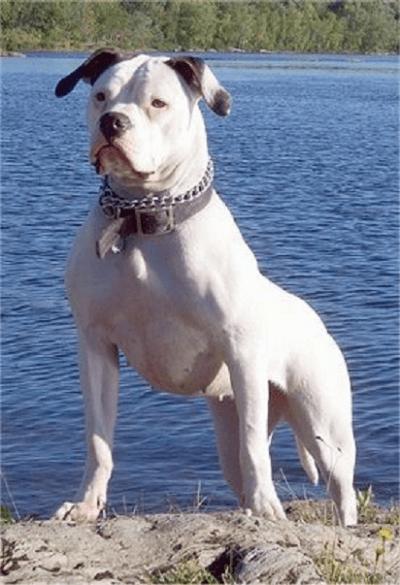 razze cani pericolose