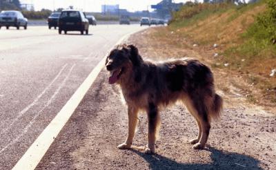 recapiti soccorso animali