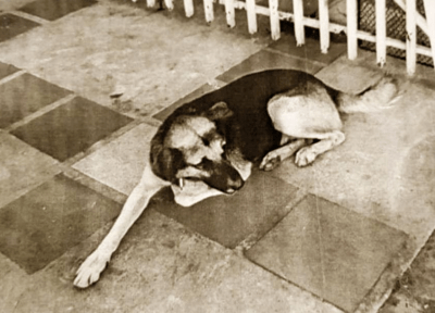 cani pericolosi