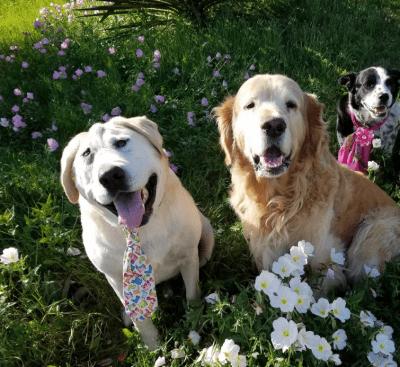 cane adozione del cuore