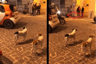 cane insegue moto