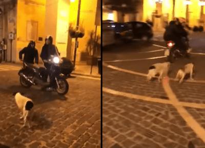 cane e moto