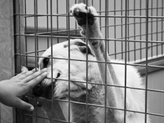 bullismo animali