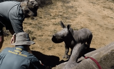 cucciolo difende madre