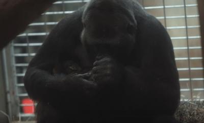 maternità animali