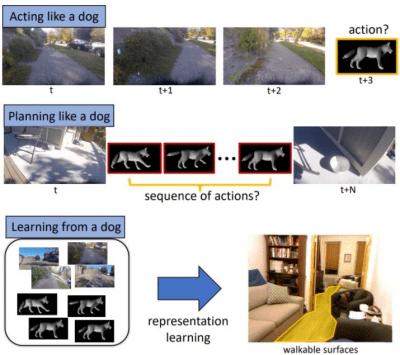intelligenza cane