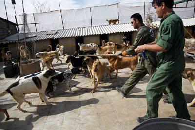 Iran cani
