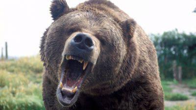 uomo uccide orso