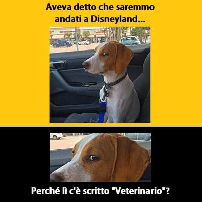 cani paura veterinario