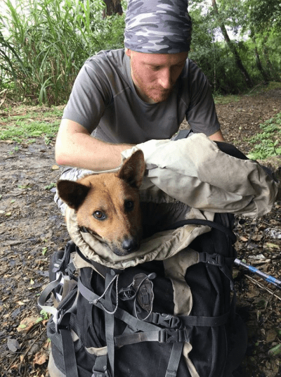 cane salvato