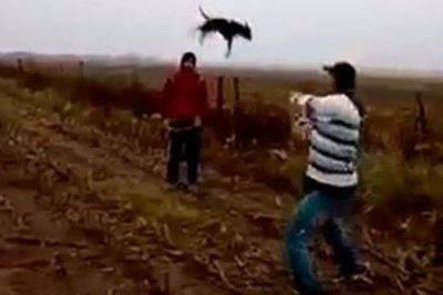 cane ucciso giovani