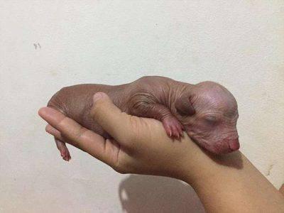 cucciolo appena nato