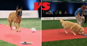 video divertenti cani