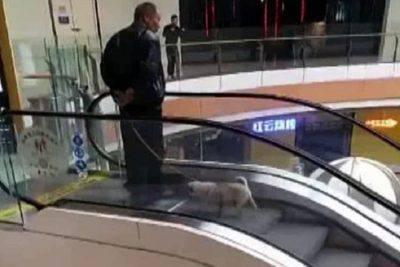 cane scala mobile