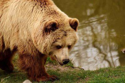 sbranato orso