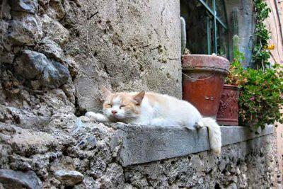 gatto decapitato animali uccisi
