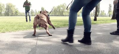 educare cane aggressivo