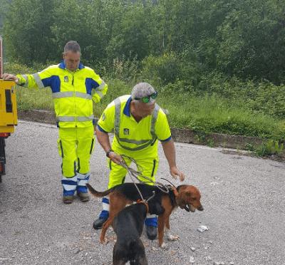 soccorso stradale animali