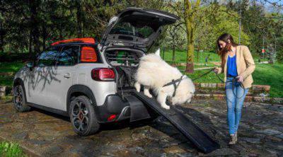 cani in viaggio