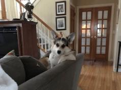 reazione cani