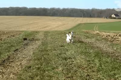 cani fuggitvi