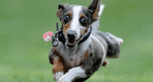 iperattività cane