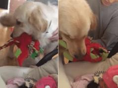 cane neonati