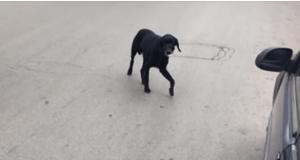 cani abbandono
