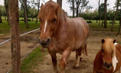 cavallo macellazione