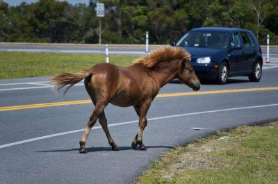 cavallo in strada