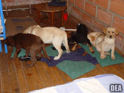 traffico internazionale cuccioli