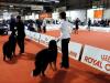 addestrare cane expo canina