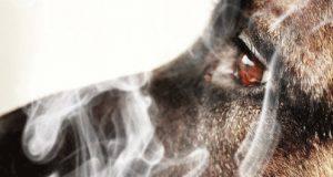 fumo passivo animali