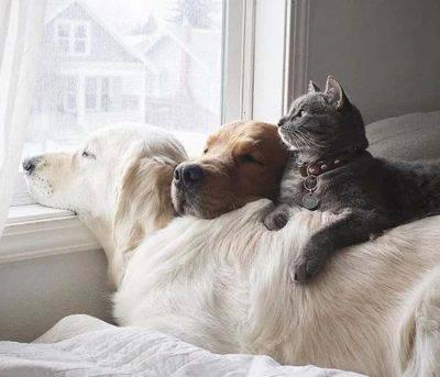 pericoli salute animali domestici