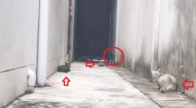 gatto salto