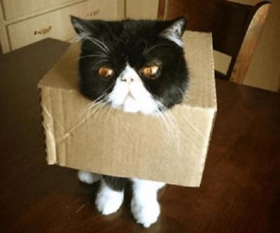 gatti nei guai